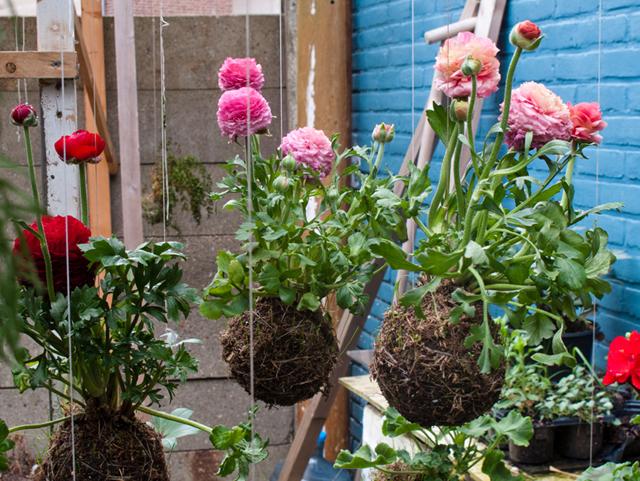 verdadeiro jardim suspenso • ideias de fim de semana
