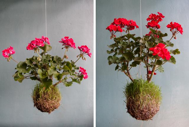 , floriculturas e ainda obter dicas de como fazer o seu jardim