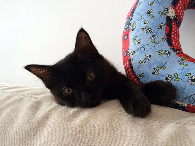 gato gil