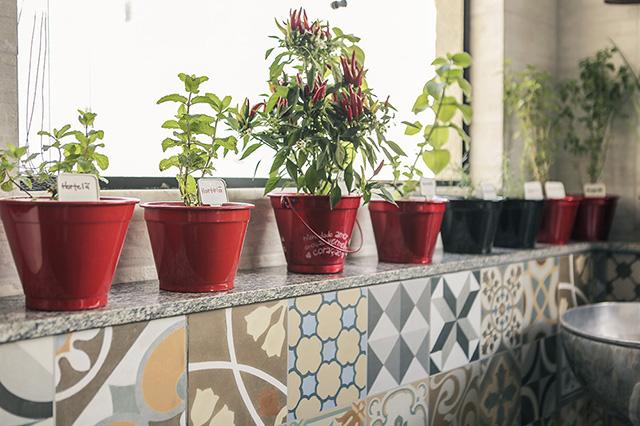plantas na decoração 7 • ideias de fim de semana