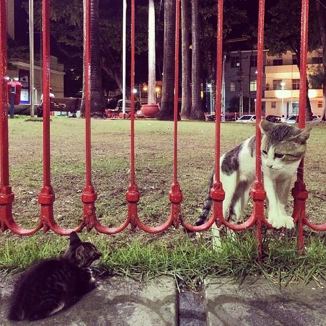 gatos na praça