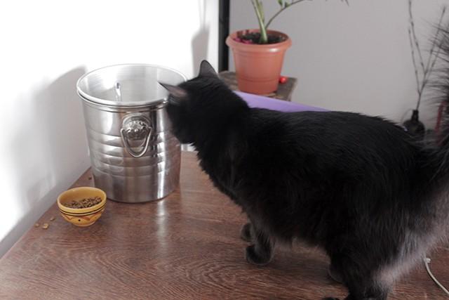 bebedouro fonte de agua para gatos 3